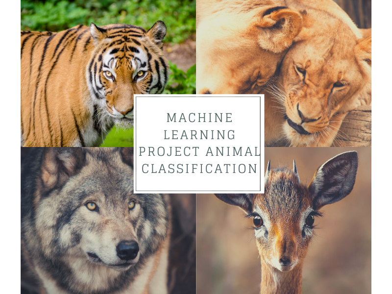 Identify the Type of animal (7 Types) based on the available attributes