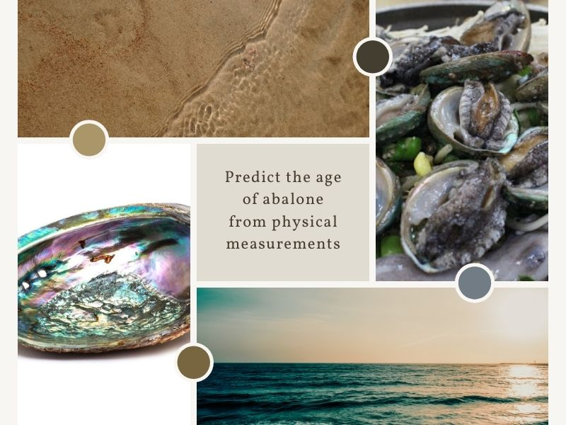 Predicting the age of abalone from physical measurements Part 2