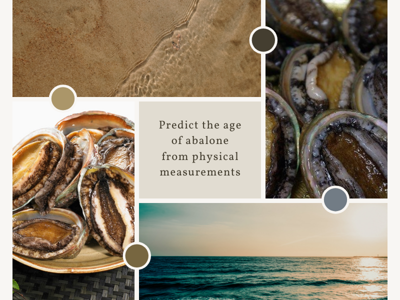Predicting the age of abalone from physical measurements Part 1